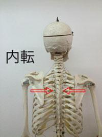 内転:腕を引き寄せる動き(胸を張る)