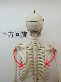 下方回旋:上腕を下げる動き